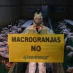 Greenpeace destapa «el maltrato de las macrogranjas»
